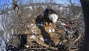 Hanover PA nest